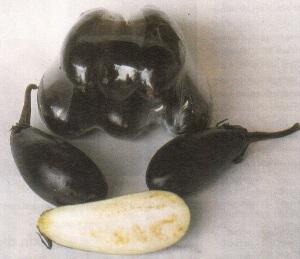 Nashubi, budidaya terong, budidaya terong unggul manual, budidaya terong ungu dalam pot, budidaya terong ungu antaboga, budidaya terong dengan polybag