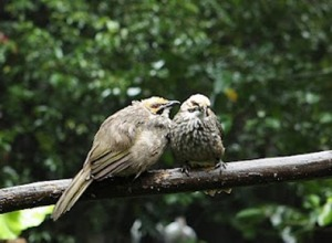 penyakit pada burung hantu, penyakit pada burung merpati, penyakit pada burung perkutut, penyakit pada burung murai batu, penyakit pada burung love bird, penyakit pada burung kenari, penyakit pada burung parkit, penyakit pada burung dara