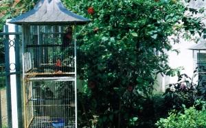 cara membuat kandang burung, kandang burung kenari, Kandang burung depan rumah, bird cage front of house, kandang burung love bird, kandang burung parkit, kandang burung ciblek