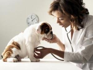 obat anjing sakit perut, jual anjing sakit, dunia anjing, anjing sakit mata, pameran anjing, anjing sakit batuk