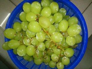 kaedah penanaman anggur, artikel perkebunan anggur, bibit anggur, tanaman anggur agar cepat berbuah