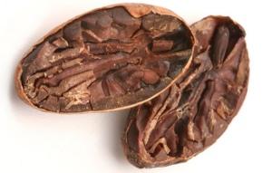 fermentasi cokelat, fermentasi coklat.pdf, tujuan fermentasi coklat, mesin fermentasi coklat, fermentasi pada coklat