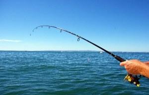memancing bagi pemula, memancing ikan air tawar, memancing ikan laut dalam, permainan memancing, memancing laut dalam, memancing ikan baung, alatan memancing