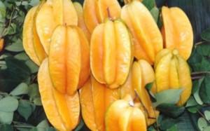 jenis buah belimbing dewa dewi, nama latin buah belimbing, ciri buah belimbing, khasiat buah belimbing, buah belimbing tanah, buah belimbing untuk darah tinggi, jenis akar pohon belimbing