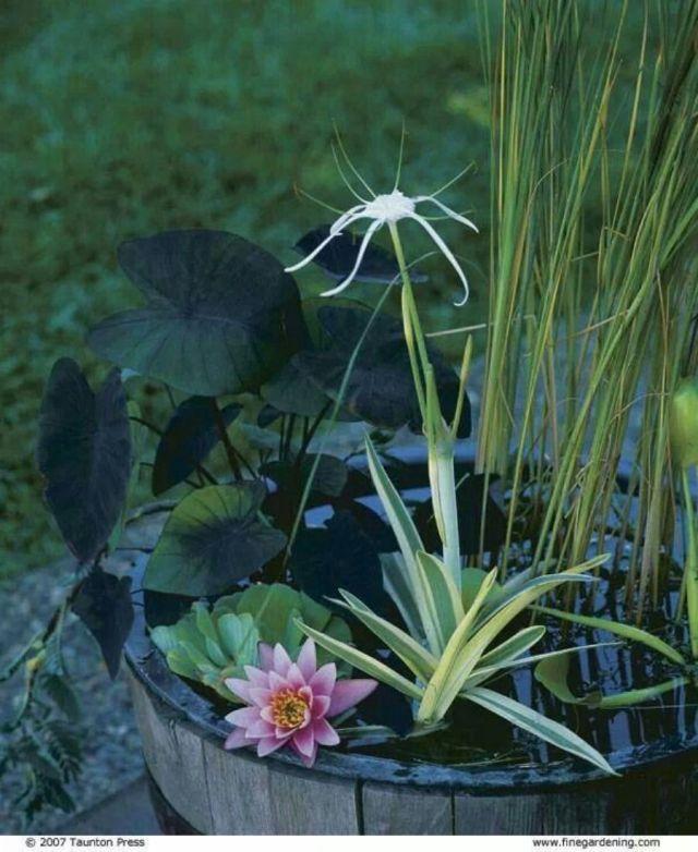 macam tanaman air, jenis tanaman air tawar untuk aquarium, jenis tanaman air aquascape, jenis tanaman air untuk aquarium