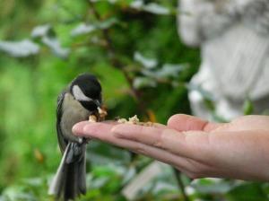 membeli pakan burung, minuman untuk burung, memberi makan burung, tips memberi makan burung supaya nurut, makanan burung
