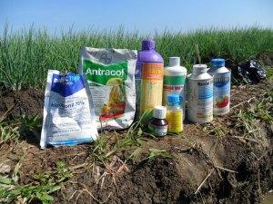Bahan, Pestisida, Cara Mencampur, Pertanian, Petani, Residu, Limbah, Harga, Murah, LMGA AGRO, Ulat, Hama, Penyakit