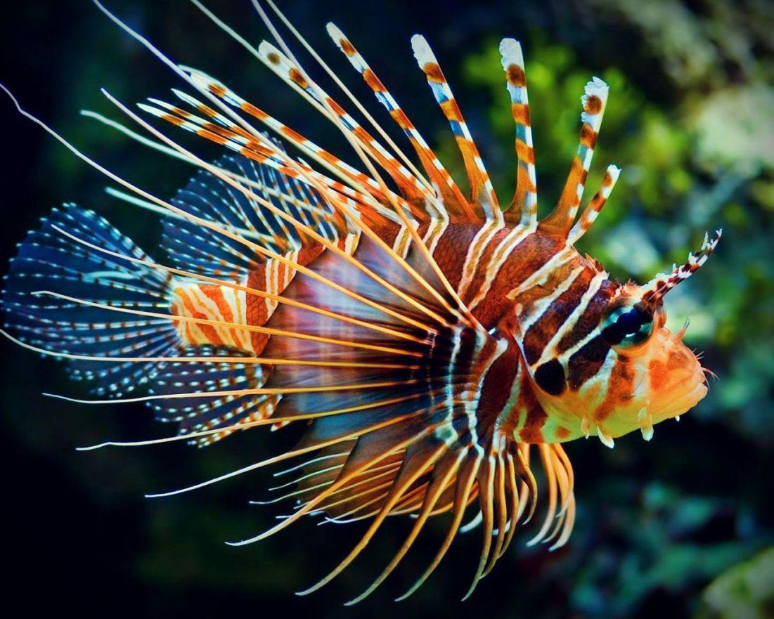 Makhluk Laut Cantik yang Berbahaya dan Mematikan | ngasih.com