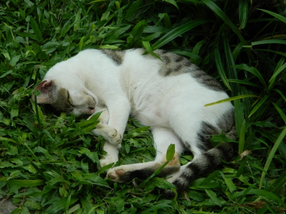 Cat Sleeping Gambar Kucing Tidur Ngasih Com